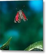 89 Butterfly In Flight Metal Print