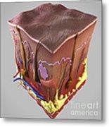 Anatomy Of Human Skin Metal Print
