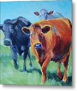 Cows Metal Print