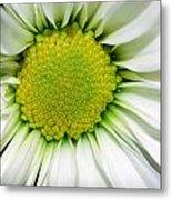 Flower Closeup Metal Print