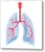 Human Lungs Metal Print