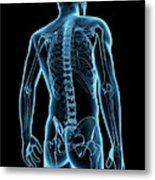 Human Spine Metal Print