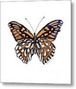 9 Mexican Silver Spot Butterfly Metal Print