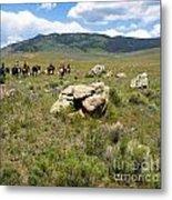 Rock Along The Trail Metal Print