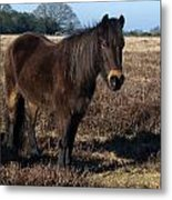 New Forest Pony Metal Print