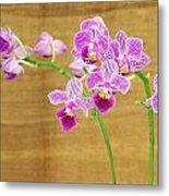 Purple Orchid-12 Metal Print