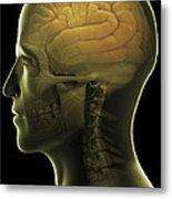 The Human Brain Metal Print