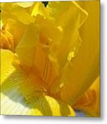 Yellow Iris 2 Metal Print