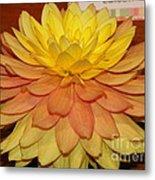 #928 D801 Dahlia Orange Yellow Pink Green Metal Print