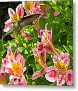 A Annas Humming Bird Metal Print