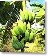 A Banana Field In Late Afternoon Sunlight With Sky And Clouds Metal Print