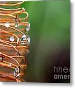 A Banksia Flowers Hold On Water Metal Print