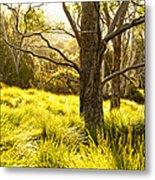A Bare Tree Metal Print