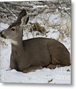 A Bed Of Snow Metal Print