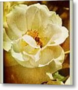 A Bee And Rose Metal Print