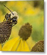 A Bee's Paradise Metal Print by Jeff Swanson