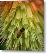 A Bee's Work Is Never Done Metal Print