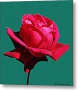 A Big Red Rose Metal Print