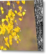 A Birch At The Lake Metal Print