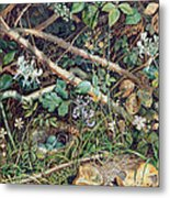 A Birds Nest Among Brambles Metal Print