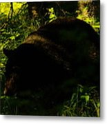 A Black Bear Metal Print