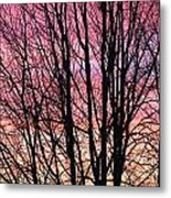 A Blast Of Color Metal Print
