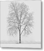 A Blizzard Moment Metal Print by Nancy Edwards