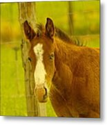 A Blue Eyed Colt Metal Print by Jeff Swan