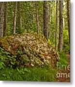 A Boulder In The Rainforest Metal Print