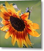 A Bow To Mother Nature Metal Print