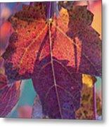 A Breath Of Autumn Metal Print by Dana Moyer