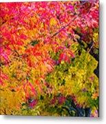 Autumn In Yountville, California Metal Print