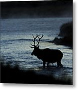 A Bull Elk Crosses The Madison In The Early Morning  Metal Print
