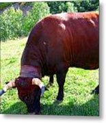A Bull  Grazing On The Meadow Metal Print