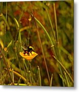 A Bumble In A Cup Metal Print