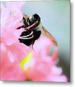 Bumble Bee And Azalea Metal Print