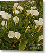 A Bunch Of Easter Sunday Easter Lillies Metal Print