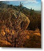 A Cactus In The Sandia Mountains Metal Print