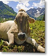 A Calf In The Mountains Metal Print
