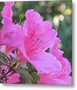 A Cape Town Flower I Metal Print