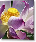 A Casual Water Lily Metal Print