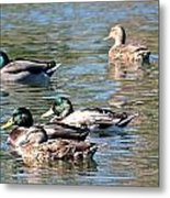 A Cluster Duck Metal Print