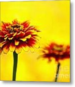 A Colorful Pair Metal Print