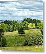 A Copse Of Trees Metal Print