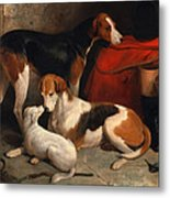 A Couple Of Foxhounds With A Terrier The Property Of Lord Henry Bentinck Metal Print