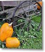 A Crop Of Pumpkins Metal Print