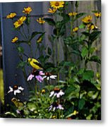 A Cute Couple Of Yellow Finches Metal Print