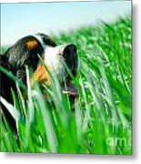 A Cute Dog In The Grass Metal Print