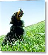 A Cute Dog On The Field Metal Print