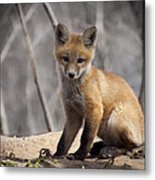 A Cute Kit Fox Portrait 1 Metal Print